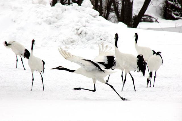 第74回釧路札幌冬季国体2019 全競技日程・結果速報の一覧!