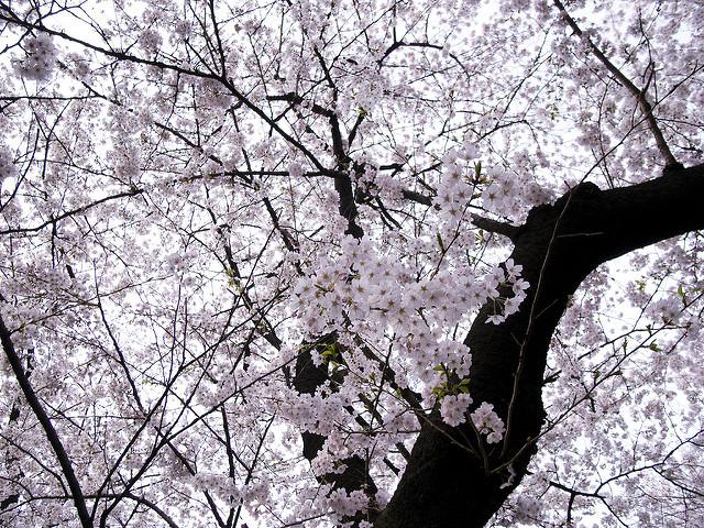 第6回さが桜マラソン2018、日程・公認コース関門!
