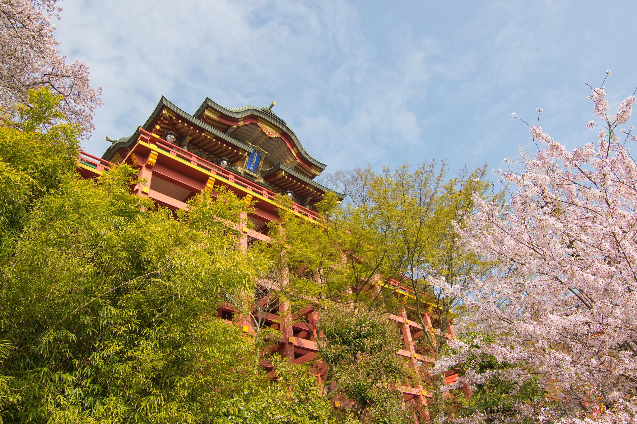 さが桜マラソン2019 結果速報・日程コース