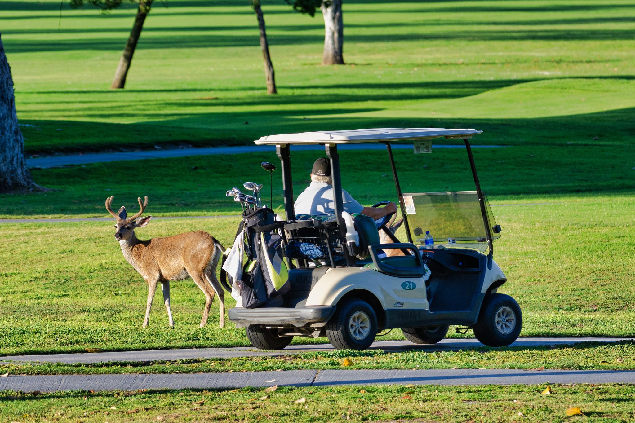 スタンレー レディス ゴルフ トーナメント 2020