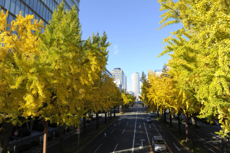 愛知県高校新人戦結果速報・日程組み合わせ