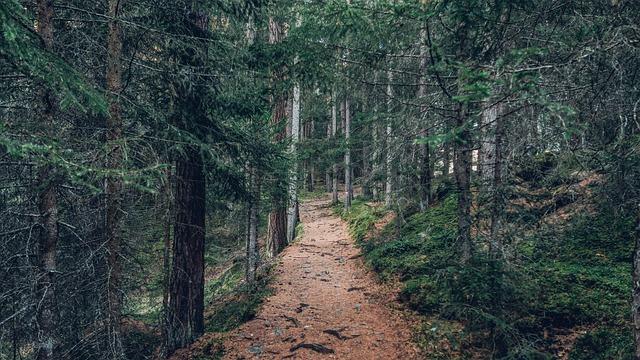 登山道を守護する危険生物