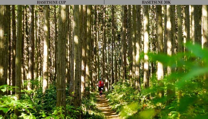 日本山岳耐久レース(ハセツネCUP)