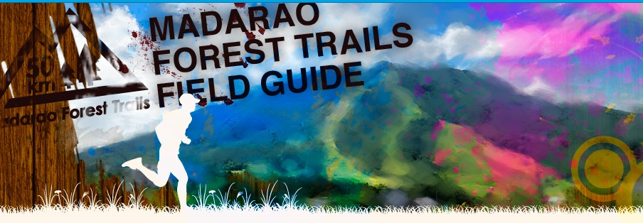 Madarao Forest Trails 50km
